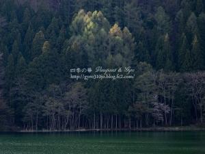 中綱湖 D