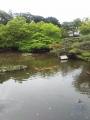 ホテルニューオータニ日本庭園(3)