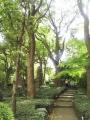 ホテルニューオータニ日本庭園(5)