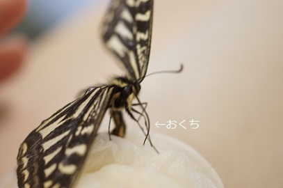DSC09855.jpg