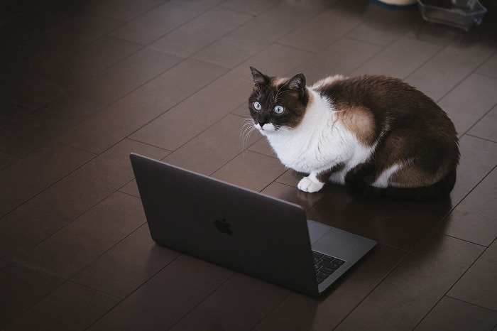 cat126IMGL6424_TP_V.jpg