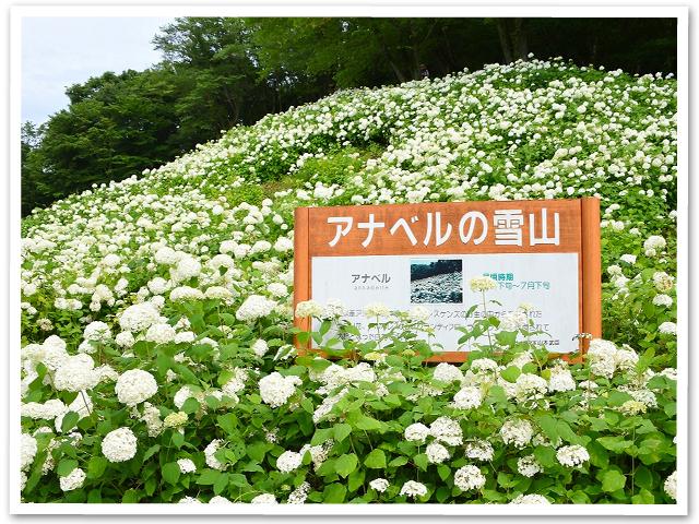 紫陽花☆WNV