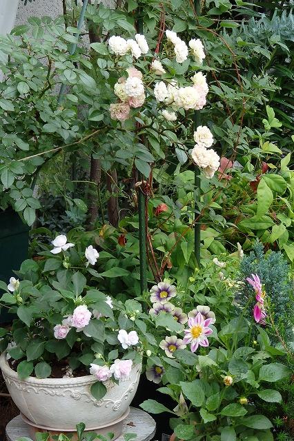 お庭 (1)