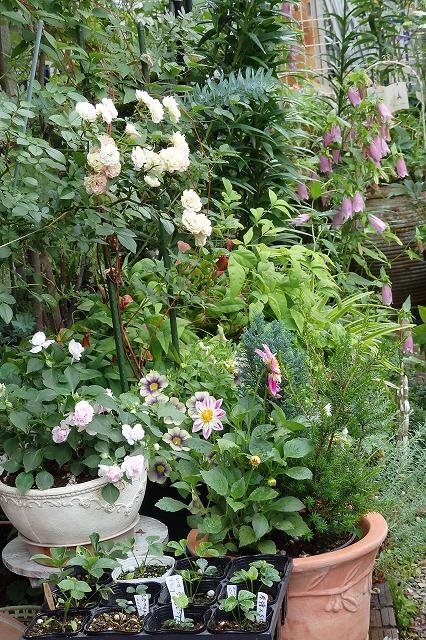 お庭 (2)
