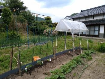 2018/05野菜畑
