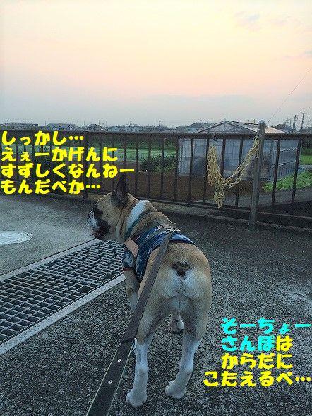 IMG_2473_20180803141117df5.jpg