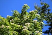 初夏の木ねずみ3