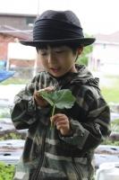 苗植え3-8