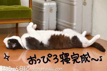 きゅうちゃんの床でおっぴろ寝の