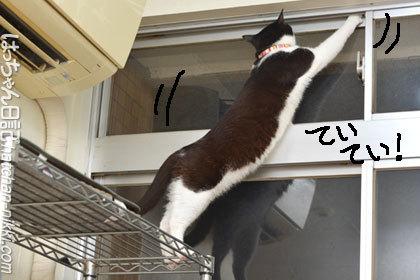 窓の外の虫を狙って