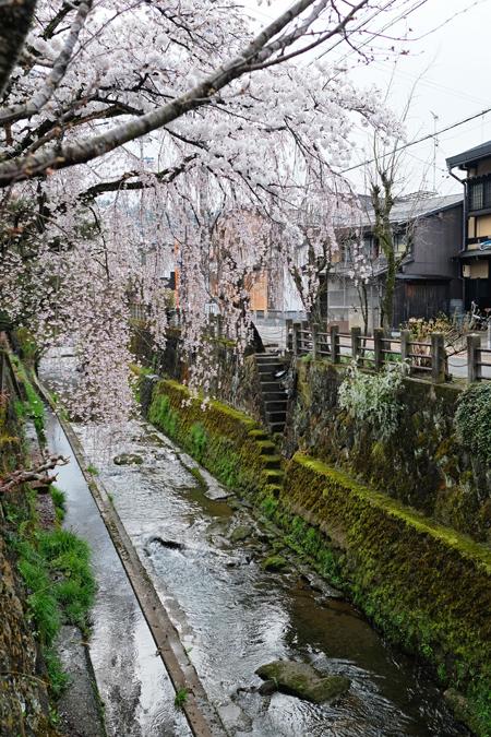江名子川沿いの桜03