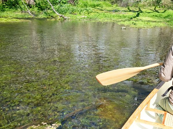 3回目の釧路川源流部ダウンリバー01
