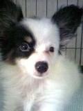 saki_puppy-2.jpg