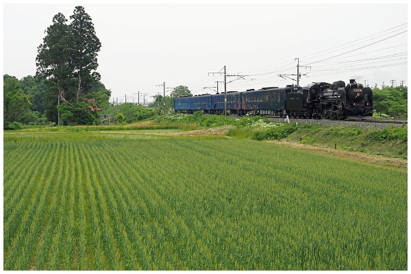 P5302100-2bo.jpg