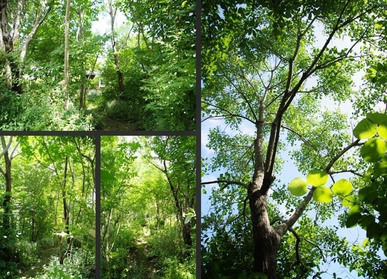IMGP1662-vert-horz.jpg