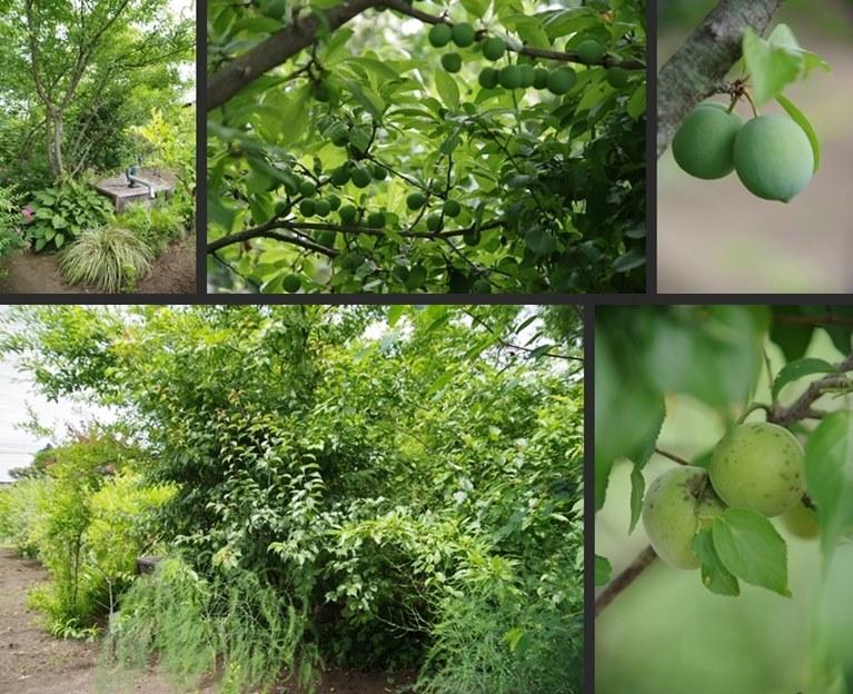IMGP3581-horz-vert.jpg