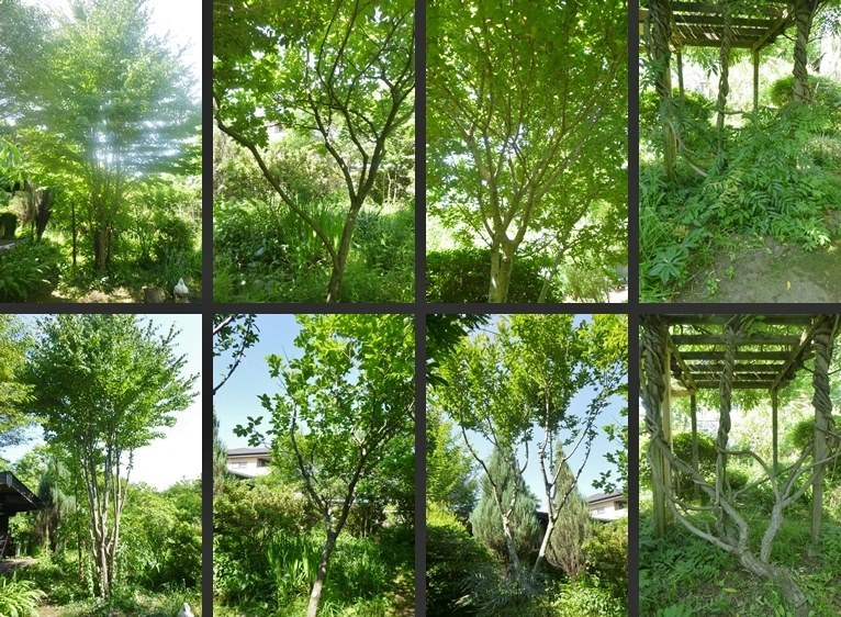 P2310752-horz-vert.jpg