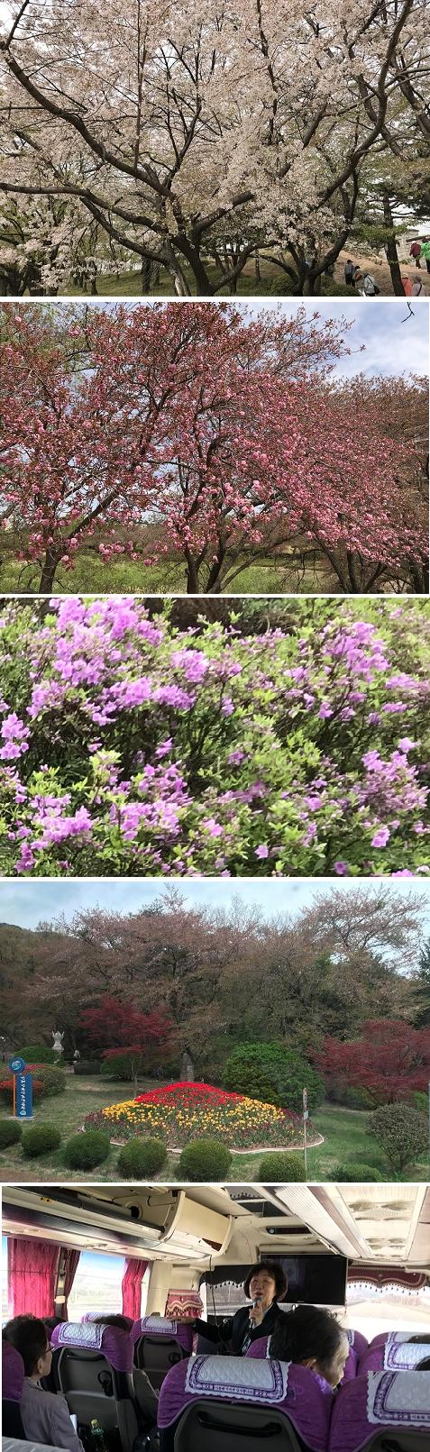 20180411桜2