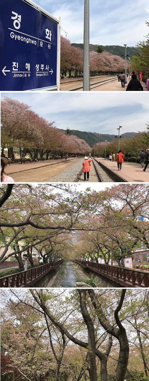 20180411桜