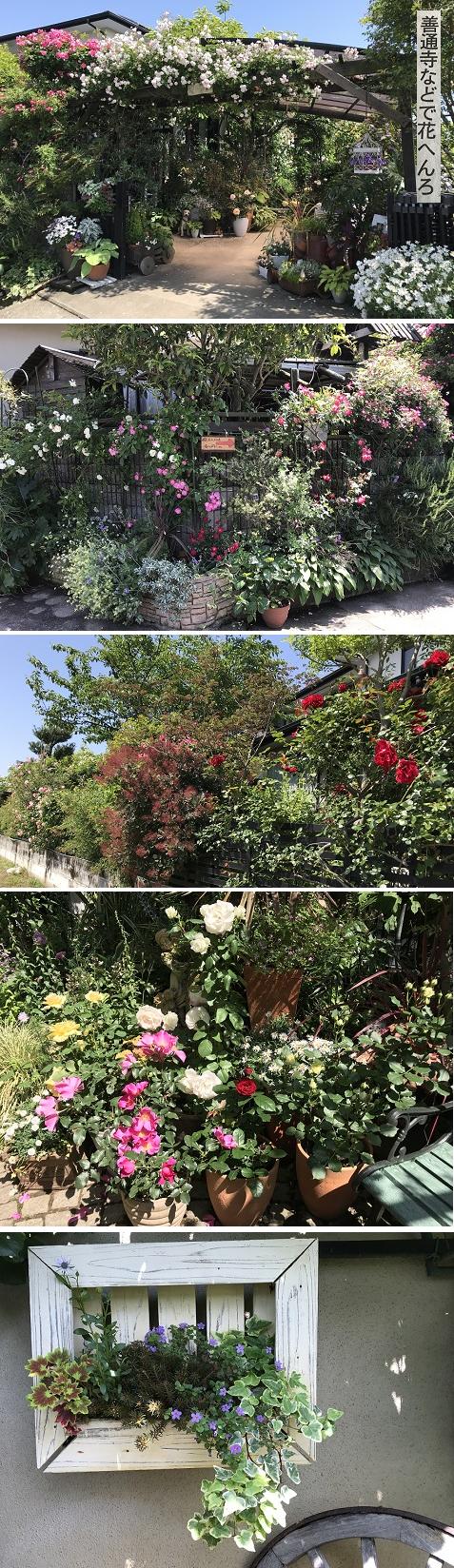 20180514花へんろ11