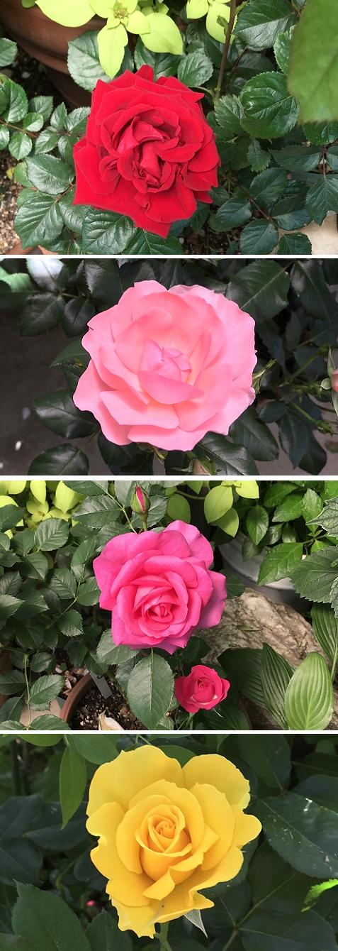 20180514花へんろ12