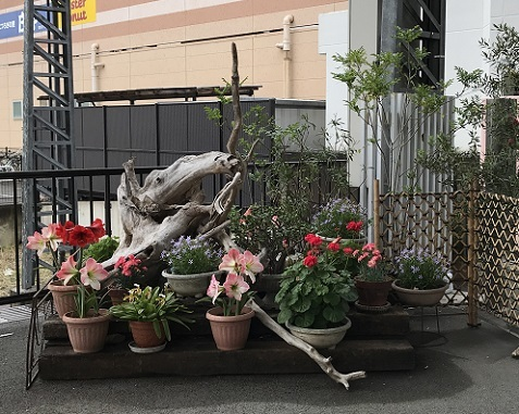 20180606高松駅構内の花