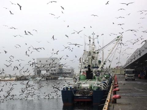 石巻漁港1