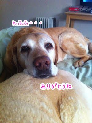 02072018_dog7.jpg