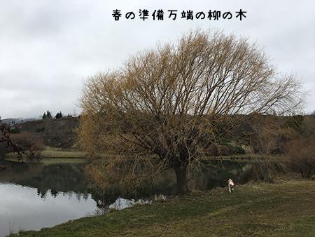 04082018_dog2.jpg