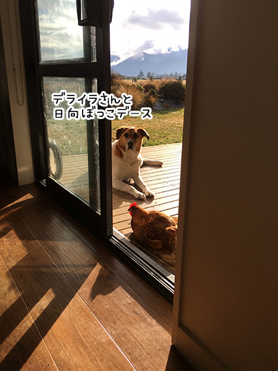 04082018_dog4.jpg