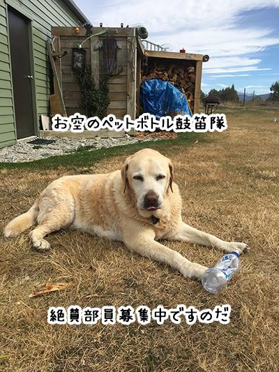 05072018_dog3.jpg