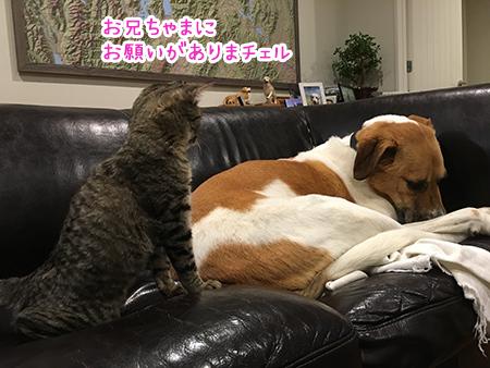 06062018_dog2.jpg