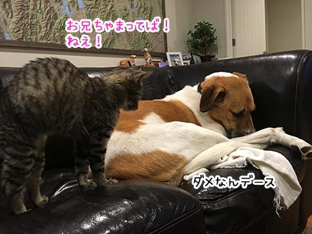 06062018_dog3.jpg