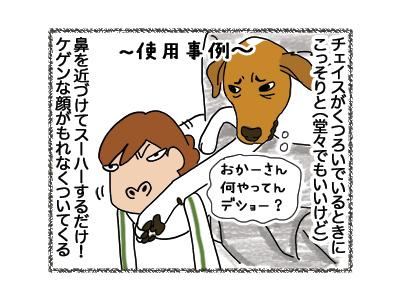 08062018_dog4.jpg