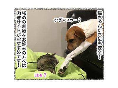 08062018_dog5.jpg