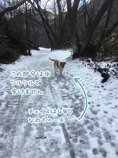 09062018_dog2.jpg