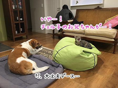10062018_dog8.jpg