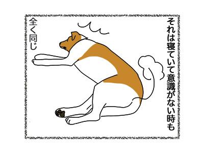 11062018_dog3.jpg
