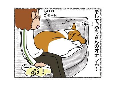11062018_dog5.jpg