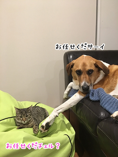 14062018_dog3.jpg