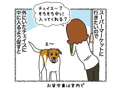 15062018_dog1.jpg