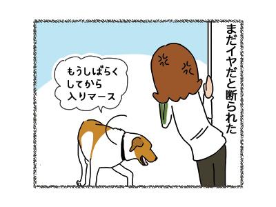 15062018_dog2.jpg