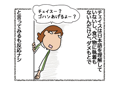 15062018_dog3.jpg