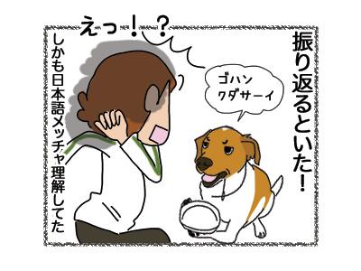 15062018_dog5.jpg
