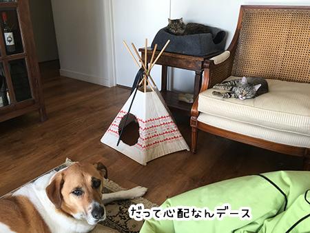 16072018_dog2.jpg