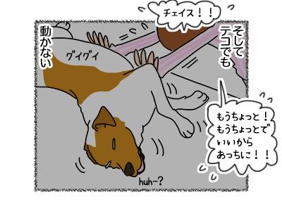 18062018_dog2.jpg