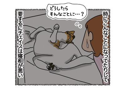 18062018_dog3.jpg