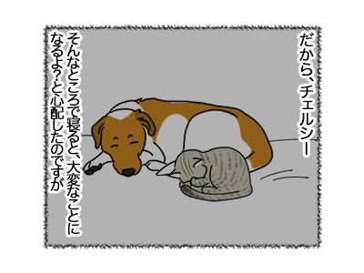 18062018_dog4.jpg