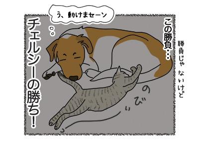 18062018_dog5.jpg