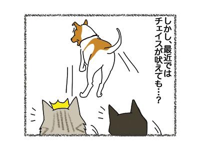 20062018_dog3.jpg